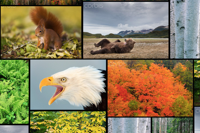Temperate Deciduous Forest Biomes Of The World